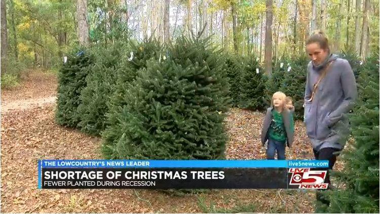 Shocking Christmas Tree Shortage Causes Prices to Spike
