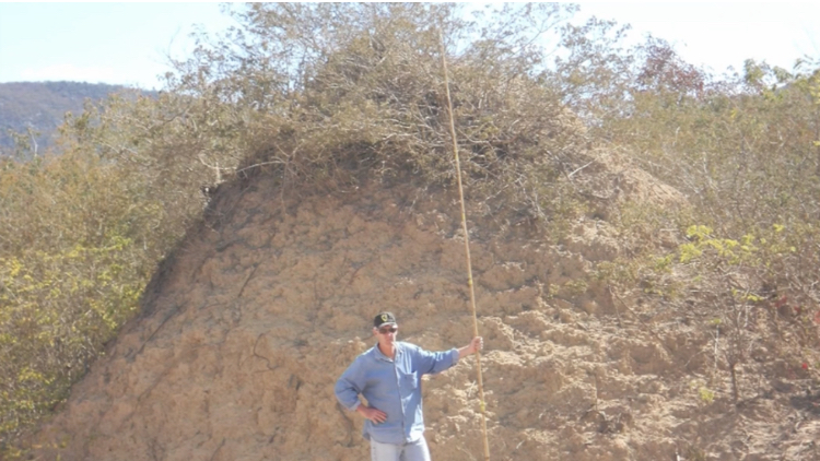 Researcher+in+front+of+termite+mound+in+Brazil.