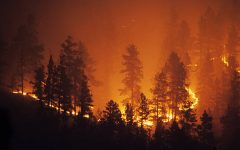 Australia's wildfires have become a major threat to the country.