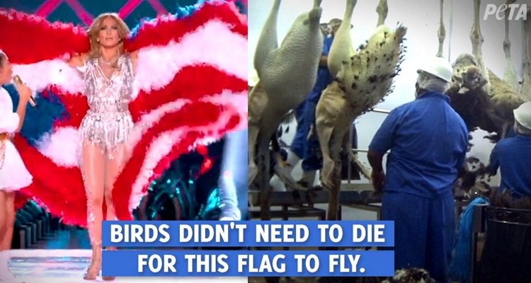 PETA%E2%80%99s+tweet%0ATweet+from+PETA+displaying+Jennifer+Lopez+wearing+a+feather+flag+and+birds+in+a+slaughterhouse.%0A
