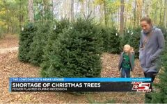 Shocking Christmas Tree Shortage Causes Prices to Spike