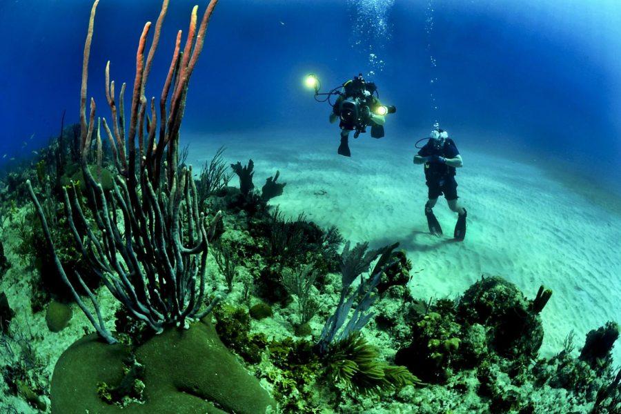 Interesting deep sea life, living on or near the ocean floor Pic credit.