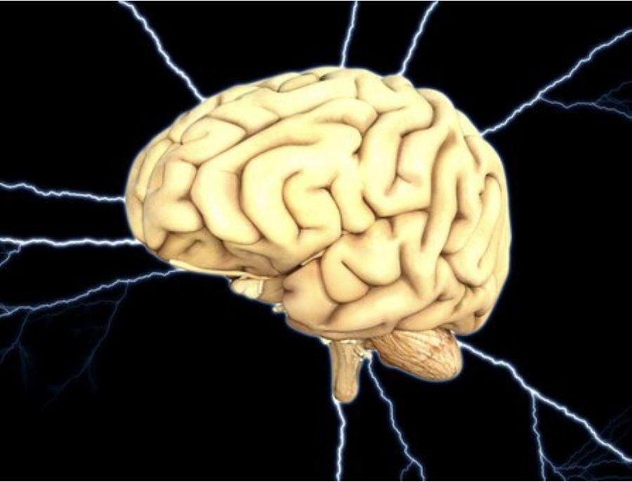 The+human+brain.