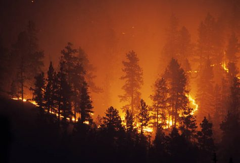 A New Way to Fight Wildfires